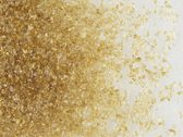 Uroboros Golden Amber Frit
